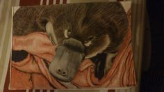 """Platypus. Made only with crayons """"Derwent Watercolour""""."""