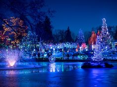 Michael Whyte took this peaceful photo at the Van Dusen Festival of Lights, an annual event with over one million lights decorating VanDusen Botanical Garden.