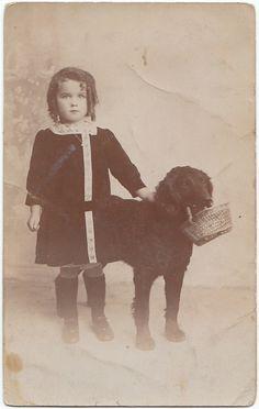 Curly-coated Retriever, c. 1910