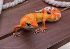 EXAMPLE WORK Leopard Gecko needle felted Soft sculpture, Wool figurine Handmade…