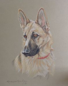 German Shepherd drawing in colored pencil on rag  mat board.