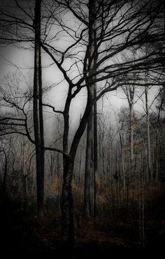 Dark forest ~