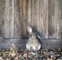 camouflaged rabbit