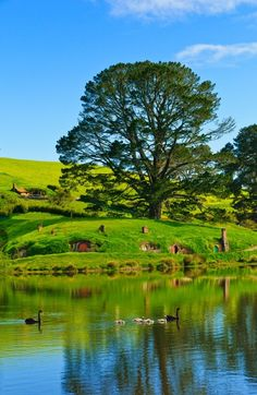 Hobbiton in New Zealand. Been Here! Love it! The Hobbit houses are amazing!