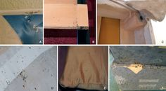 Sites to be inspected in the search for bedbugs in a home: (A) mattress, especially its seams and piping, (B) structural bed components: slat sheaths, (C) corners of the bed base, (D) tops of curtains near the bed, (E) pillow, and (F) behind the couch