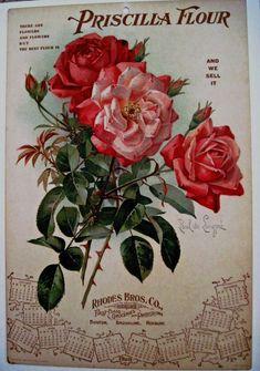 """Large 1908 Advertising Calendar w/ Beautiful Roses Print by """"Paul de Longpre"""" *"""