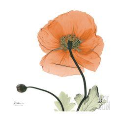 A Gift of Flowers in Orange Art Print by Albert Koetsier at Art.com