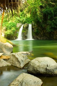 Get soaked in the beauty of the surroundings, the rushing stream, the verdant rain forest and the thundering waters of Bunga Falls.