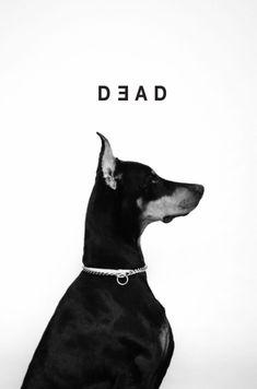 Black Doberman, Doberman Love, Scary Dogs, Doberman Pinscher Dog, Black Aesthetic Wallpaper, Pet Grooming, Your Dog, Dog Cat, Cute Animals