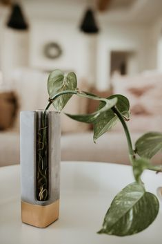 Cement Test Tube Propagation Vases – Ashley Rose Clothing Window Plants, Window Sill, House Plant Care, House Plants, Rose Clothing, Pothos Plant, Replant, Plant Needs, Drying Herbs