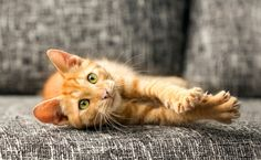 Bill to Ban Declawing in New York Gets Support From Ricky Gervais