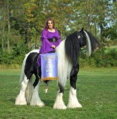 gypsie horse