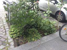 Auch in Tiergarten :-) Urban Gardening, Guerrilla, Street, City, Plants, Animals, Lawn And Garden, Flora, Apartment Gardening