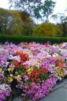 flower  gardens full of flowers