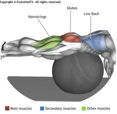 GLUTES -  HIP EXTENSIONS ON STABILITY BALL