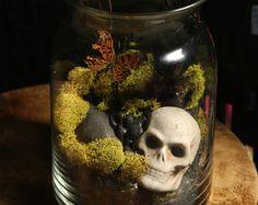 Taxidermy terrarium butterfly antique skull moss vase