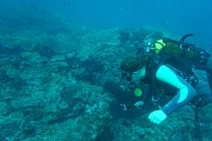 Marine Reef and Conservation - dykking - Rundtekvator Scuba Girl, Womens Wetsuit, Best Swimwear, Zulu, Campers, Conservation, Divas, South Africa, Outfit Of The Day