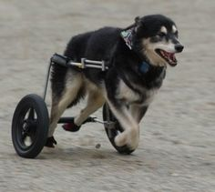 dog wheelchair reviews