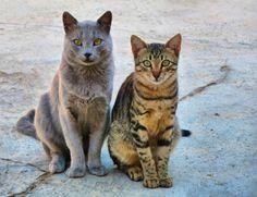 CATS by gül  salih on 500px
