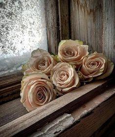 Flores Wallpaper, Flower Phone Wallpaper, Rose Wallpaper, Trendy Wallpaper, Rose Cottage, Beautiful Roses, Pretty Roses, Beautiful Scenery, Vintage Flowers