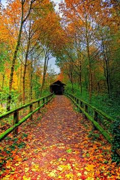 Autumn pathway, how beautiful!