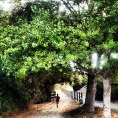 """To Run or Not to Run...There is No Question."" Trail running - near Carmel Valley - San Diego, Ca."