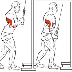 Tricep pulldowns; This can be performed with a cable machine or exercise bands.