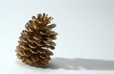 Mom and homeschooler Martianne Stanger offers 5 sensory diet activities you can do with... PINE CONES! Pinned from Our Journey Thru Autism by SPD Blogger Network. For more sensory-related pins, see http://pinterest.com/spdbn
