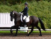 Impressive FAHNA registered Friesian with spectacular movement and sweet disposition. Shown through 1st Level successfully with scores to 70%, schooling 2nd Level now for 2014 show season. Great match for Adult Amateur or Junior! $30,000