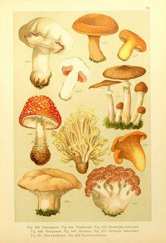 Old maps and prints: I love them! Botanical Drawings, Botanical Illustration, Botanical Prints, Mushroom Art, Mushroom Fungi, Crystal Drawing, Gravure, Vintage Flowers, Vintage Prints