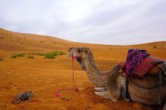 Depois da primeira etapa, tínhamos pela frente outra grande jornada, desta vez para chegar ao deserto de Merzouga, no final do dia. Leiam aqui. Grande, Camel, To Go, Places, Animals, Travel Photography, Morocco, The Journey, Traveling