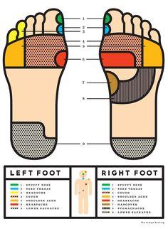 Hello | The Indigo Bunting: Foot Reflexology Illustration