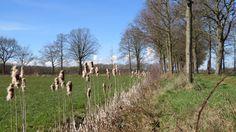 2015-04-05 Mooi wandelpad door de weilanden bij Veldhoek, nabij Heino