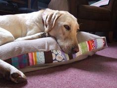 dog bed!