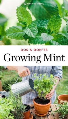 Container Gardening For Beginners Advices About Growing Mint Growing Vegetables, Growing Plants, Growing Herbs Indoors, Garden Plants, Indoor Plants, Box Garden, Shade Garden, Mint Garden, Herb Garden Design