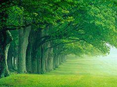 zoveel bomen zo weinig schaduw