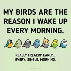 #aviariesdiy