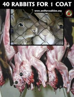 Here's the rest of your rabbit Fur coat that the rabbit was still wearing when it was skinned alive! Stop buying Fur anything!