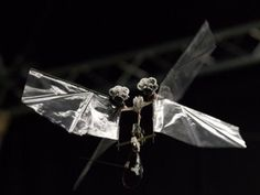 Robots That Fly Like Fruit Flies Advancement In Drone Technology