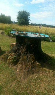 Giant bird bath- hallowed tree with old satellite dish