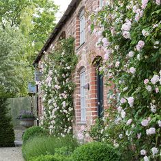 How to plant climbing roses, clematis, jasmine and other plants is part of Front garden Feature - Here's how to plant climbing roses, jasmine and other plants, and create a bright and cheerful garden feature to enjoy this summer