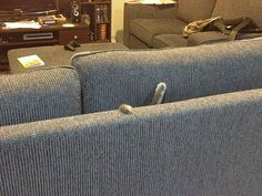 Pls Halp, I'm Stuck In The Couch funny animals ca 77434921 t animal lol humor funny pictures funny cats funny photos funny images funny animal pictures hilarious pictures