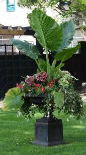 #Container #Plants #10