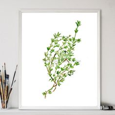 Art Print Thyme herb print watercolor painting by TheJoyofColor