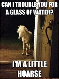 hahaha - had a horse just like this one - his name was sligh, and he used to come in the house if we left the back door open.