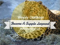 Weekly Challenge: Become a Supple Leopard How To Become, Challenges, Workouts, Strong, Strength Training Workouts, Excercise, Work Outs, Exercise, Exercise Workouts