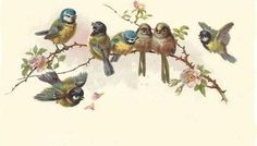 bumble button: A new blog to visit. antique postcards late 1800's little child in a shell and little birds