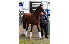 Belmont Stakes hopeful Union Rags arrives at Belmont Park in Elmont, New York, June 6, 2012.