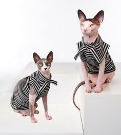 Furless Fashion… really too cute to miss! | under the blanket