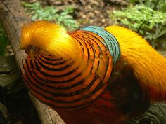 7 Most #Exotic Animals ...